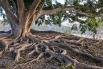Pastor's Letter – April 2015 – Rooted in theLord